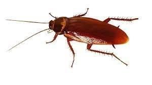 Cockroach Control Kinston, North Carolina