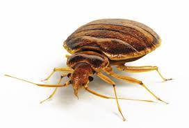Bed Bugs Kinston, NC